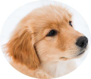 犬用のアプリのアイコン画像