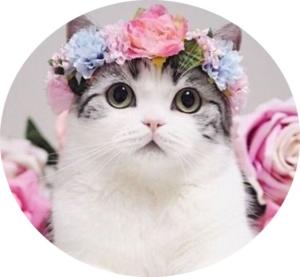 猫用アプリのアイコン画像