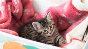 私が飼っていたペットの猫みぃくんが段ボールに入っている画像