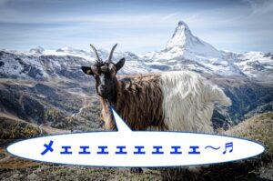 ヤギが山の上でこちらを向いてビブラートをイメージできるような鳴いているイメージ画像